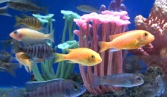 How to Care for Tropical Fish