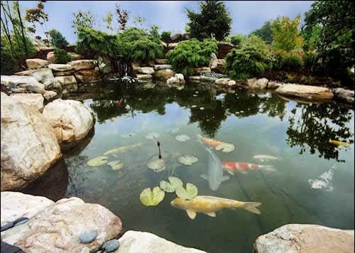 Water Gardening1
