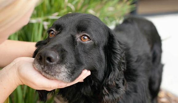 comparing pet insurance plans