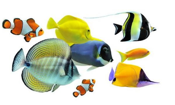 Care for Tropical Fish